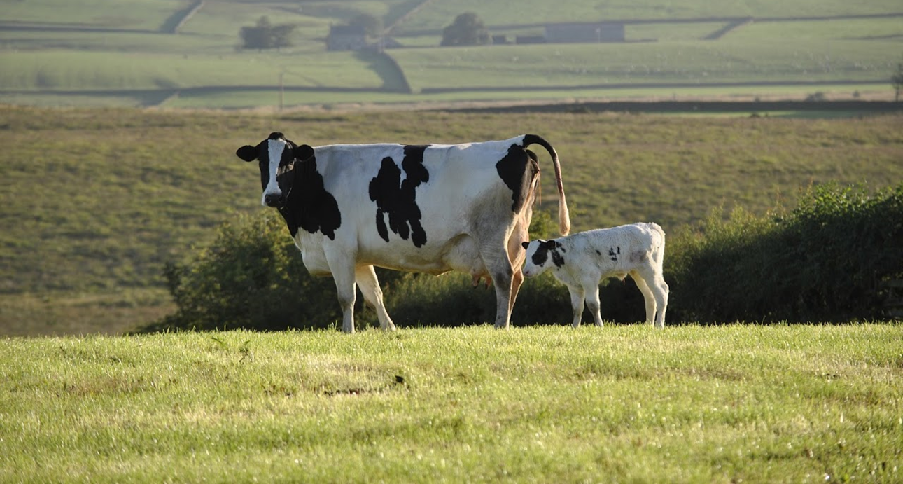 June 2019 - Dry Cow Prediction and Genome Testing